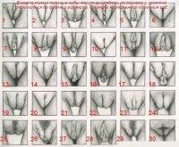 Вид женских писек фото 658-90